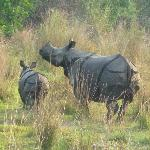 Rhino at 10 metres