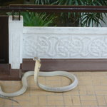Photo de Snake Farm (Queen Saovabha Memorial Institute)
