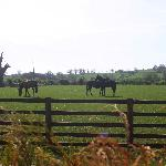 Foto de Thornton Lodge Farm B&B