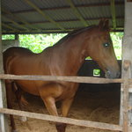 Kuda P Stables