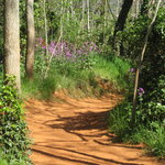 The Ochre Trail