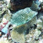  Trunk fish
