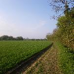 South Norfolk Countryside/Walks