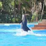 Photo of Dolphinaris Tulum