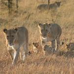 My favourite picture of my time in the Mara