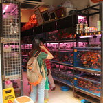  Goldfish Mkt.