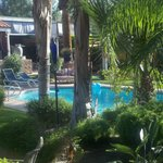  Peek-a-boo shot of the pool through some of the many stately palms on the property.