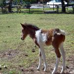 Foal at the Refuge Inn