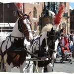 Horses at the main square in Krakow
