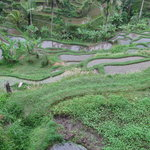 Rice Terraces of Tegalalang and Ubud