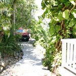 Driveway and path to the front - very lush foliage provides LOTS of privacy