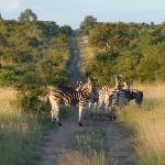 Zebra crossing ;-)