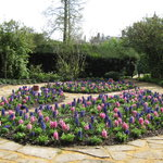 Clare Fellows' Gardens