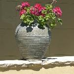 Flower pot