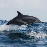 Dolphin watching tours.