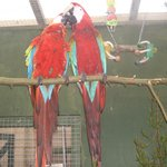The Island Parrot Sanctuary