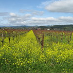 Your Driver In Napa Private Tour