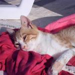 THE beautiful cats of Syros <3 <3 <3