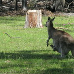 Foto de Australian Eco Adventures - Private Day Tours