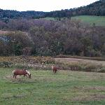 Kickapoo Valley Ranch Guest Cabinsの写真