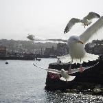  Gulls by the Harbour