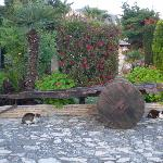 Garden area - please note cats are NOT a nuisance, very timid, just hang around