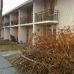 Our building--with dead branches piled up, junky porches and overflowing trash