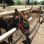 Nerja Donkey Sanctuary