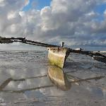 Dow at Low Tide
