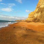 Isle of Wight Fossil Hunts