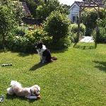  Woody with Mungo in the fabulous garden!