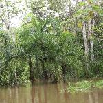  La selva - flooded, during high water