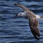 Seabirds and Seals - Day Tours