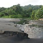 Leatherback turtle nesting beach