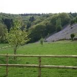 Our Bluebell Field and Hill