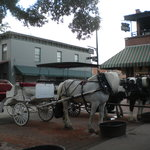 A horse & carriage for private tours next to our horses & carriage.