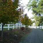 Bilde fra Deer Haven Farms Bed and Breakfast