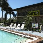  Swimming Pool Gator Motel