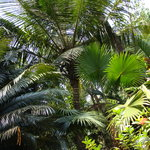 Palm Grove Cottagesの写真