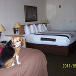 Foto de Kelly Inn West Yellowstone