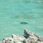  Manta Ray from Lighthouse Beach cliff