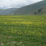 Piana di Castelluccio di Norcia
