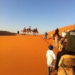 Camel Trekking - Day Tours