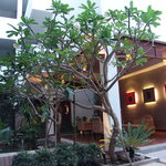 Frangipani Fine Arts Hotel