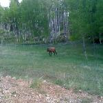 Elk in meadow at retreat