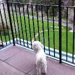 Doggie enjoying patio of the condo