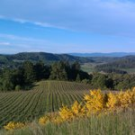Photo de Youngberg Hill Vineyards & Inn