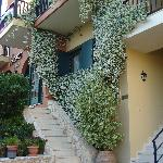 beautiful Jasmine at front of Erodios apartments