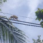 Monkeys on the power lines around the hotel!