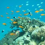 Beautiful coral reefs and fishes